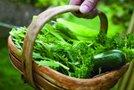 Zelenjava v košari