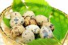 Prepeličja jajca