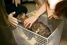Maček Zoro