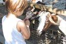 Parco Zoo Punta Verde - 20