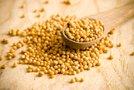 Gorčična semena