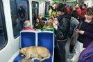 Kuža na vlaku