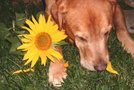 Kuža z rožicami