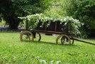 Okrasni kmečki voz