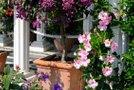 Bujno cvetje mediteranskega vrt