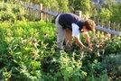 vrtnarka