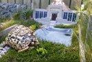 Jurski park za želvo