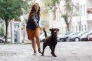 Pes na ulici vleče lastnico