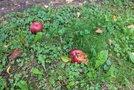 trava jeseni