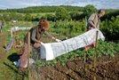 Zaščita rastlin jeseni