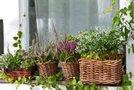 zelišča in cvetlice