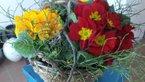 Pomladanski cvetlični aranžma