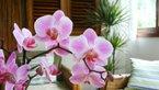 Orhideja v dnevni sobi