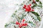 Božično deblo