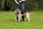 Policijski pes