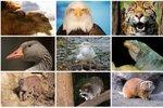 živali - naslovna