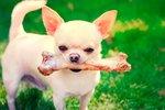 pes s kostjo