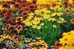 Okrasni vrt jeseni