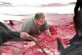 Tudi Danci pobijajo delfine - 7