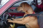 Živali vozijo avtomobile - 6