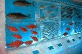 Edinstven japonski ledeni akvarij