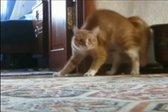 VIDEO: V mački reinkarniran Michael Jackson