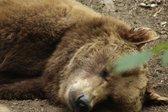 Speči medved