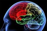 Možgani - 5
