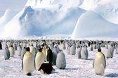 Kako izgleda antarktika brez ledu - 3