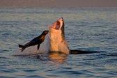 Tjulenj pokončal pet morskih psov