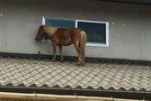 Kobila na strehi naslovka