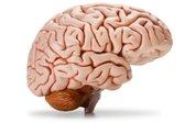 Možgani