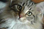 Čudne mačje vrste - 5