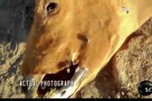 Misterij pokolov goveda - 4