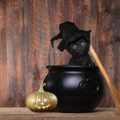 Črna mačka