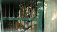 Živalski vrt, Gaza