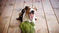 Pes je brokoli