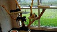 Mačke, stanovanje