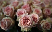 Rože - 5