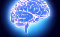 male sive celice, možgani