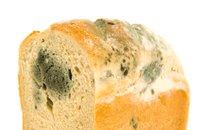 Plesnivi kruh
