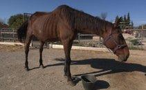 Zanemarjen konj