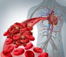 Srčno-žilni sistem