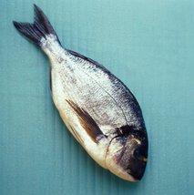 Ribe - 2