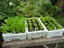 Vrtnarjenje z bioogljem