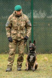 Vojaški službeni psi
