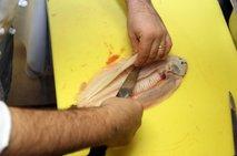 Filiranje ploščatih rib