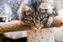 Maček na praskalniku
