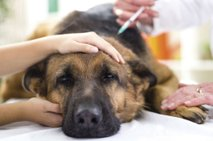 Pes pri veterinarju