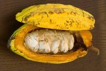 Kakavov plod